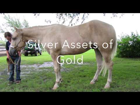 Silver Assets Of Gold