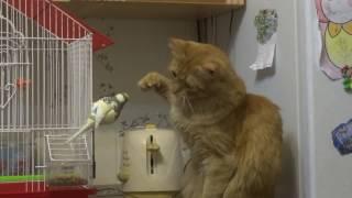 Попугай и кот Первое знакомство