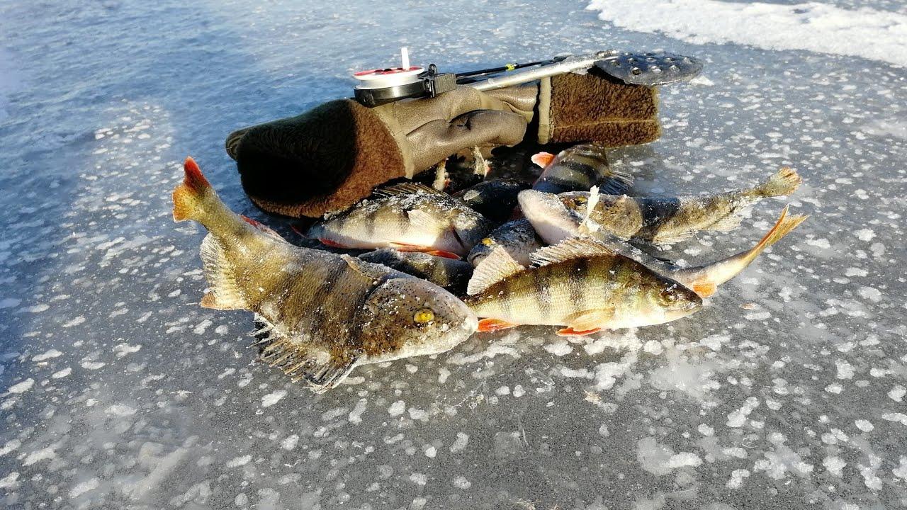 Рыбалка в самаре на окуня