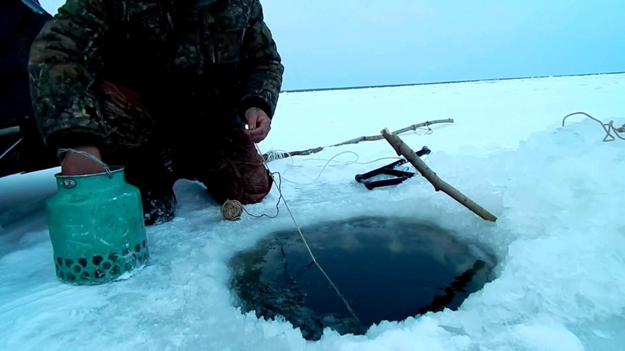 Лов налима на перемет зимой видео