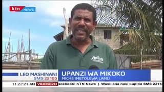 Wakazi wamepata msaada wa miche, Miche imetolewa Lamu