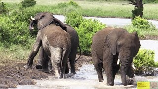 Lovable And Playful Elephant Herd