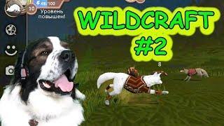 WildCraft #2. Редкая одежда. Битва с лисами. Прохождение Симулятор зверей онлайн