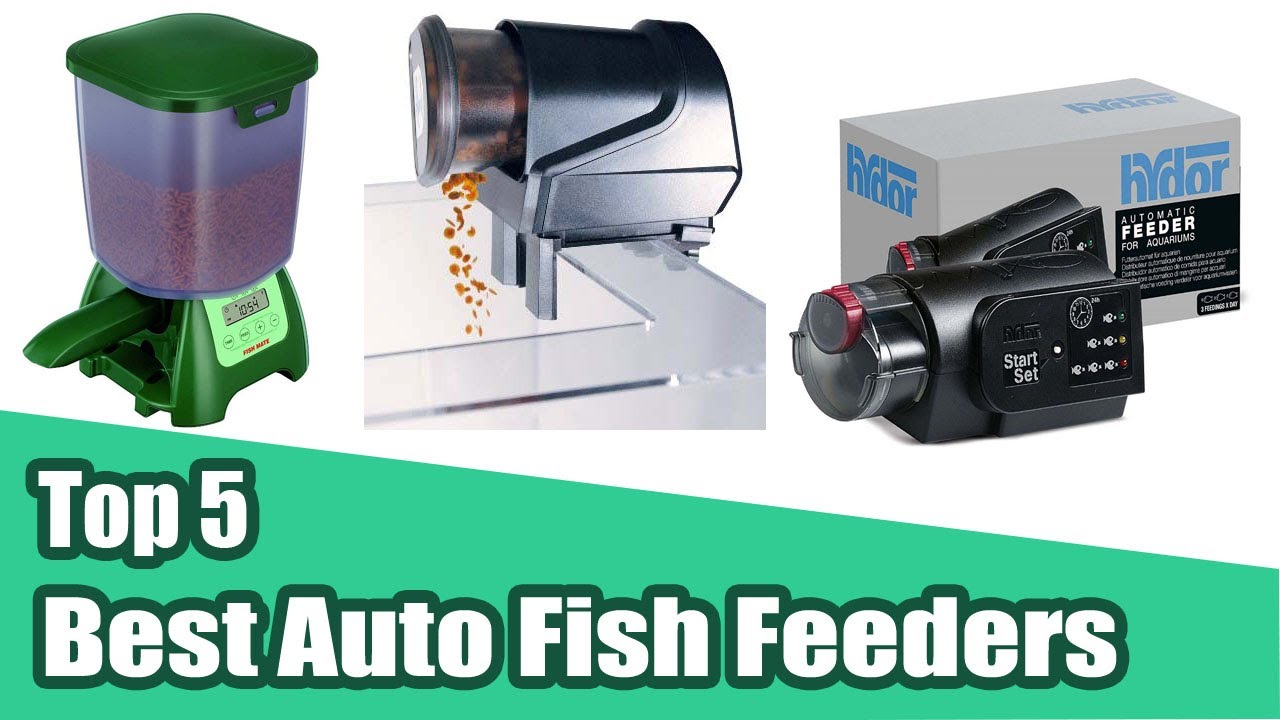 auto automatic direct feeder pond fish bradshaws hozelock