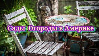 Огород в Америке #сад #огород #садогород #огородвамерике