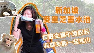 新加坡CB解除-麥里芝蓄水池運動Vlog_記得開啟字幕