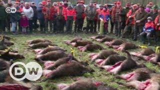 Alarm bei deutschen Schweinezüchtern | DW Deutsch