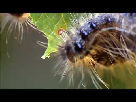 Animals like Us : Animal Web (Wildlife Documentary)