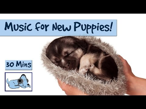 Music to Calm your Brand New Puppy!!!
