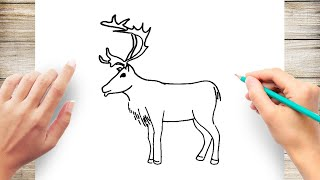How to Draw Reindeer Animal for Kids Step by Step