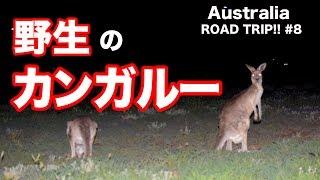 オーストラリアの人口より多いらしいよ。カンガルー。 まじきもい(好き...