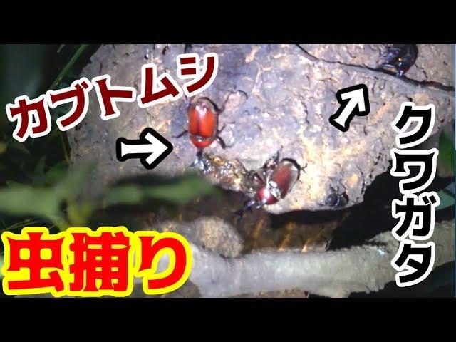 【キャンプ】夏の山奥でクワガタ探し!