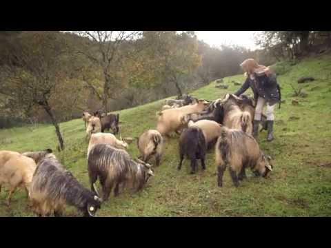 Dream of Italy: Full Tuscany Episode