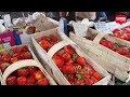 Szokujące ceny truskawek! Co na to kupujący?
