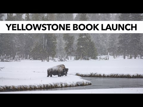 NEW BOOK Launches Today! Yellowstone National Park in Winter