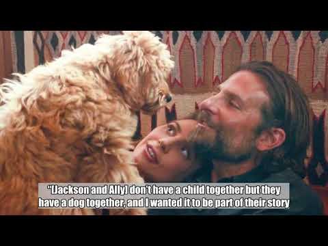 Bradley Cooper's dog just won him PETA's 'Oscat' Award for Best Director Mp3