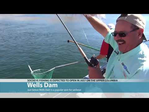 Sockeye Fishing The Upper Columbia 2020-06-25