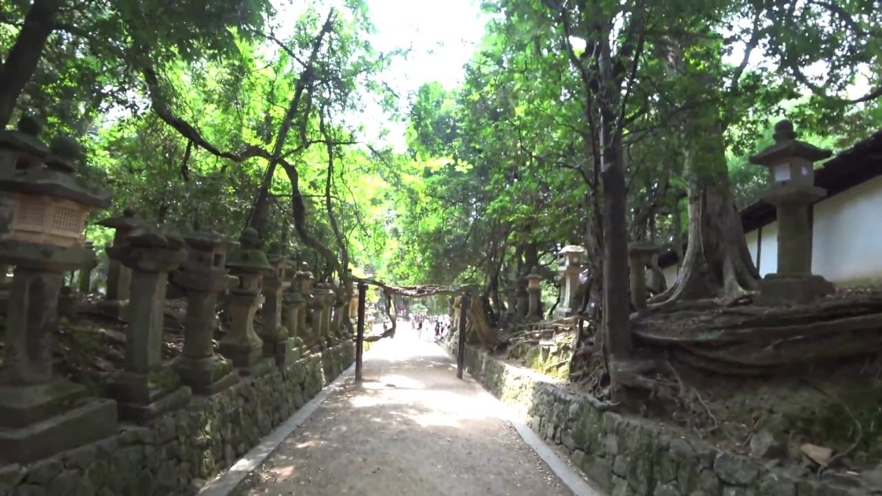 日本旅遊景點 - 奈良春日泰山神社 - YouTube