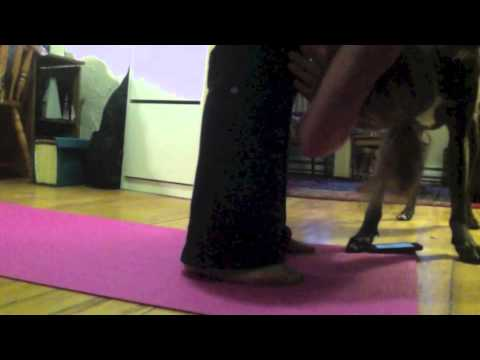 0 Um cachorro que não deixa a dona praticar Yoga