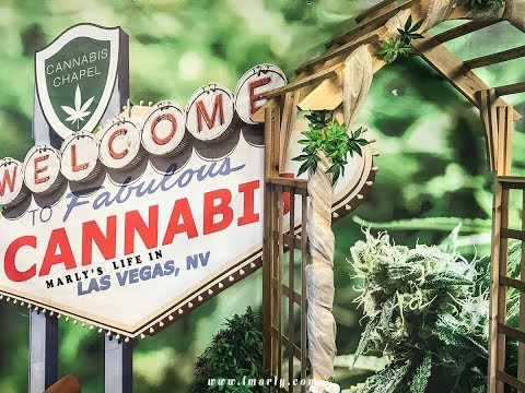 Top 3 Requirements for Jobs in the Cannabis Industry in Nevada