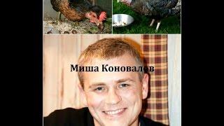 Юрист Абрамов Юрий. Невеев и его петух Миша Коновалов
