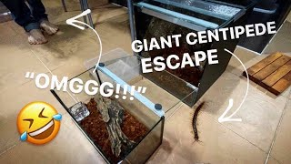 He had to REHOME my GIANT CENTIPEDE AGAIN !!! LOL ~ [PART 2] Sorry dude 🤣 🙏🏼