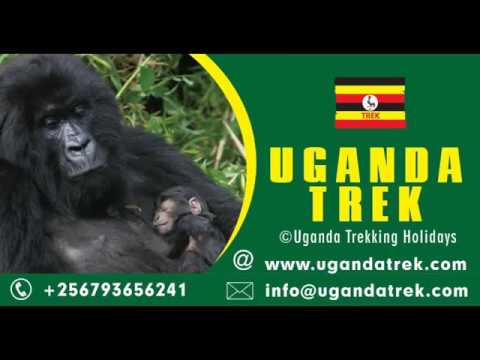 Uganda Trekking Holidays | Uganda gorilla trekking