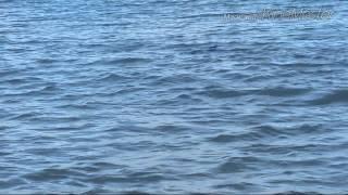 kualoa oahu during a blue moon ulua fishing