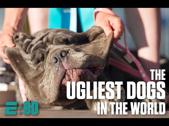 Meet the ugliest dogs in the world   E\:60