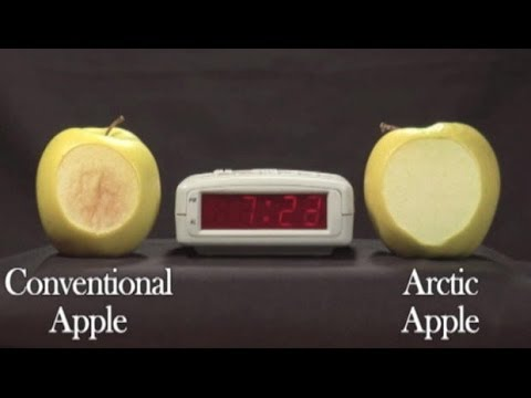 Genetically modified apple won't turn brown