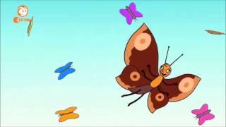 Löwenzähnchen - Das Schmetterling Lied