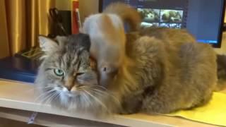Кот и Белка дружба на век