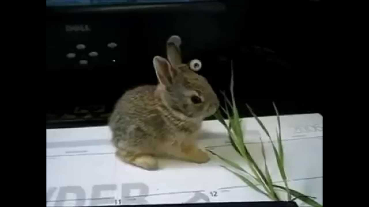 The Sound A Rabbit Makes - YouTube