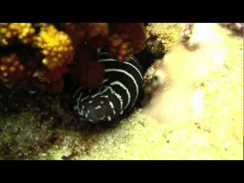 Cabo Pulmo - National Marine Park scuba diving HD.mov