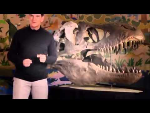 Dinosaur Discoveries T  rex & Raptorex
