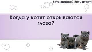 Когда у котят открываются глаза? [139]