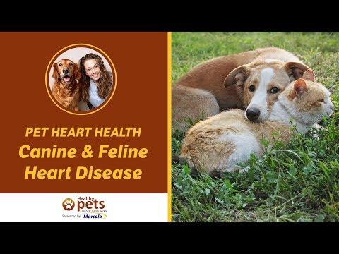 Pet Heart Health