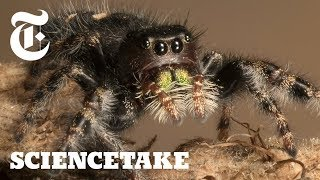 How to Give a Spider an Eye Test | ScienceTake