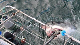 Faccia a faccia con lo squalo Bianco - Mossel Bay