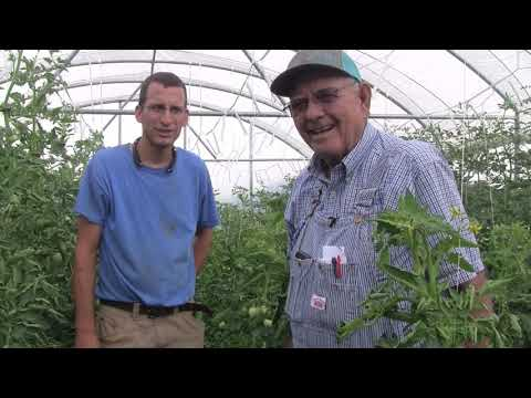 Cucumbers And Tomatoes At Ardmore Adventist Academy Ep 93