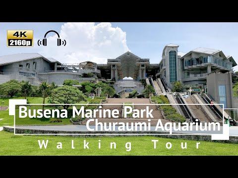 [4K/Binaural Audio] Busena Marine Park / Churaumi Aquarium Walking Tour - Okinawa Japan