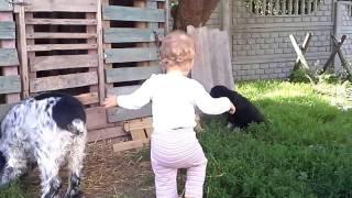Трусливые собаки//Собака боится кошку//Dogs scared cat//