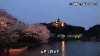 三渓園の夜桜ライトアップ/神奈川新聞(カナロコ)