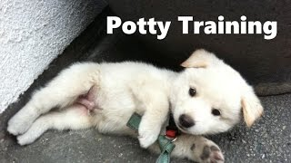 How To Potty Train A Jindo Puppy - Korean Jindo House Training Tips - Housebreaking Jindo Puppies