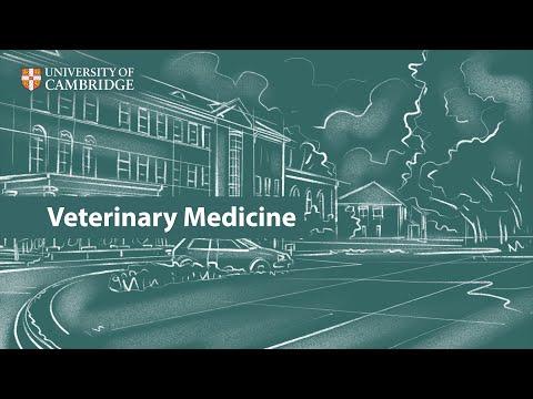 Veterinary Medicine at Cambridge