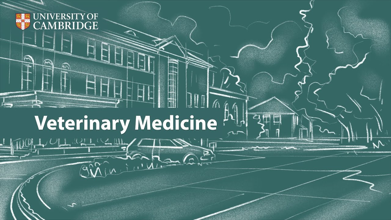 Veterinary Medicine | Undergraduate Study