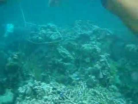 Snorkeling in Cuba pt 1
