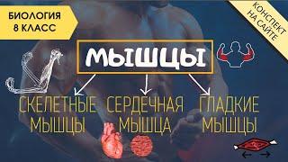 Мышечная система | Видеоурок по биологии 8 класс