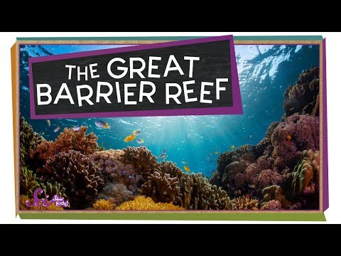 Check Out The Great Barrier Reef!