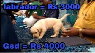 Galiff Street Pet Market Dog Price